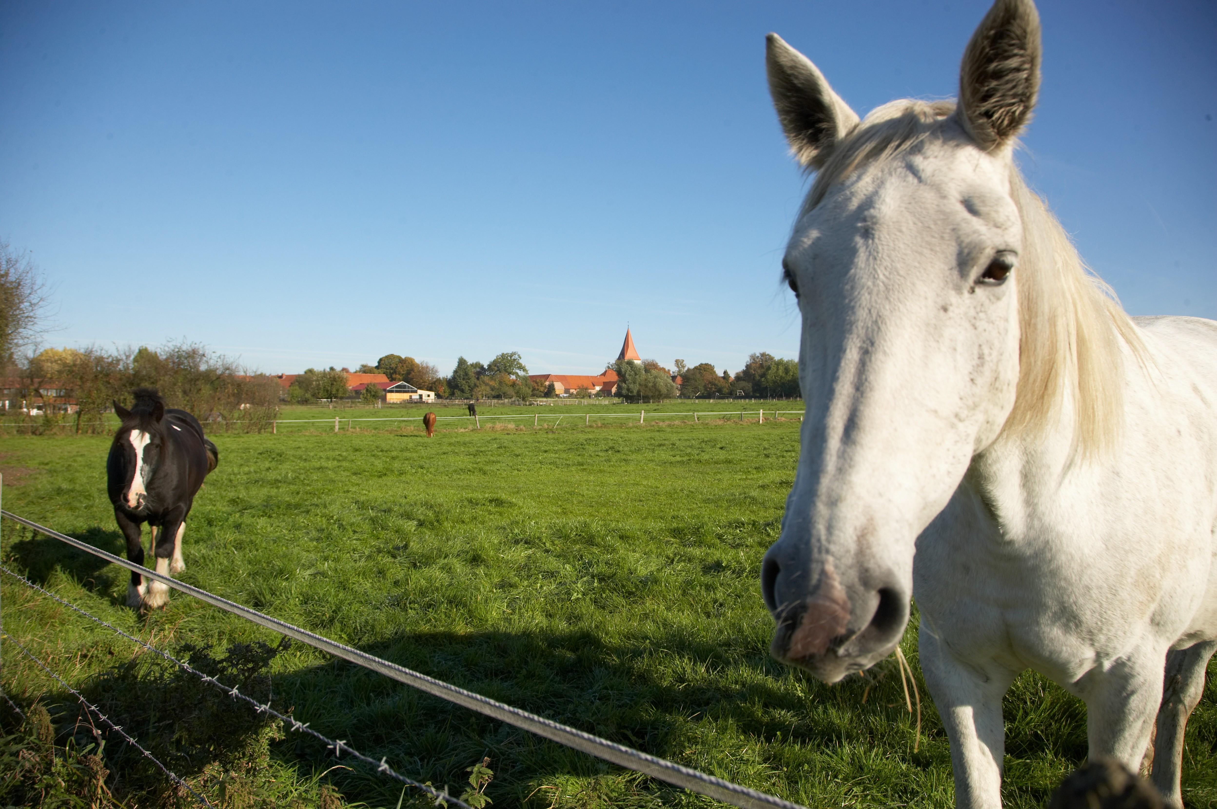 Pferdeweise Isernhagen